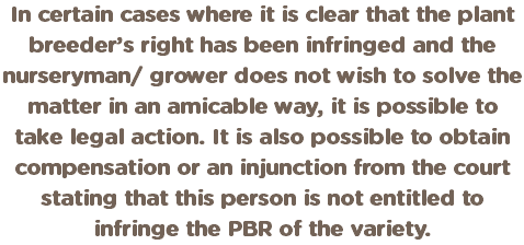 In certain cases where it is clear that the plant breeder's right has been infringed and the nurseryman/ grower does not wish to solve the matter in an amicable way, it is possible to take legal action. It is also possible to obtain compensation or an injunction from the court stating that this person is not entitled to infringe the PBR of the variety.